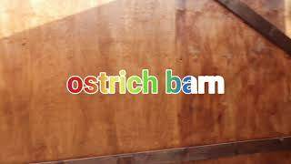 the ostrich barn is progressing | there future home part 2.