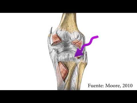Menor dolor y la inflamación de las piernas dolía la espalda