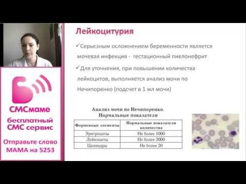 Беременность и почки. Анализы мочи во время беременности