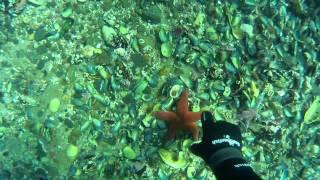 Как ловят крабов на кольском полуострове