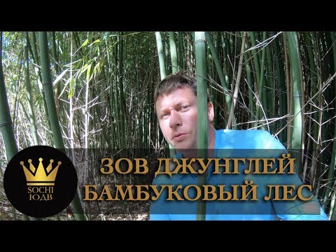 Зов джунглей!