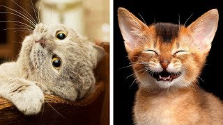 10 Dangerous Cat Breeds That Are Still Awww