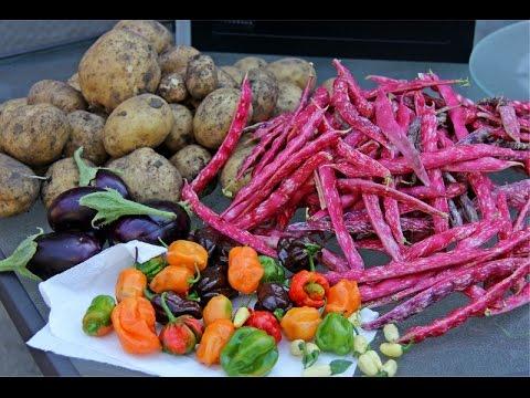 Harvest Time In My Kitchen Garden.