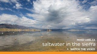 Learning about Mono Lake with local naturalist Erik Lyon