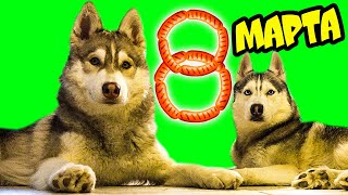 БУКЕТ ИЗ СОСИСОК НА 8 МАРТА 🌭 (Хаски Бублик) Говорящая собака Mister Booble