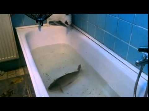 Vasca Da Bagno Perde Acqua : Perdita di peso con vasche da bagno di senape reduksin 15 mg di 60