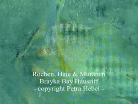 Schnorcheln in der Brayka Bay, Brayka Bay,Ägypten