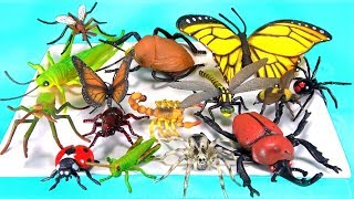 Insects Names For Kids Learn Colors Bugs Toy Videos For Children Teaching Baby Toddler Kindergarten