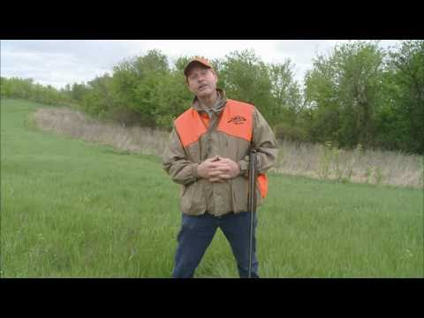 Downed Bird Hunting Dog Training