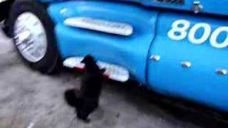 trucker cat jump to work
