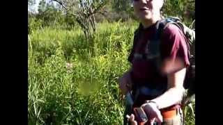 Eastern massasauga rattlesnake research