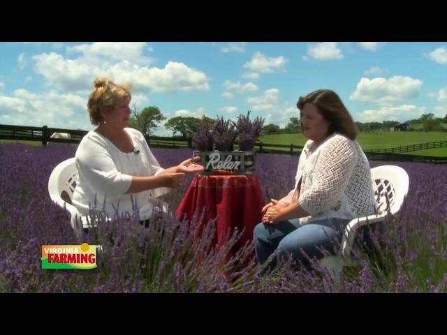 Virginia Farming: Lavender
