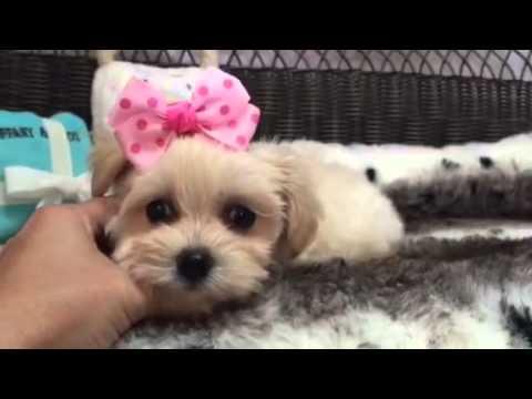 affectionate little malchi