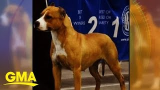 Prize-winning show dog vanishes at busy airport | GMA