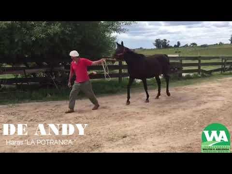 Lote DE ANDY