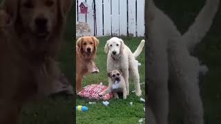 OMG!!! A Compilation of Dogs And Cats Doing Their Own Thing