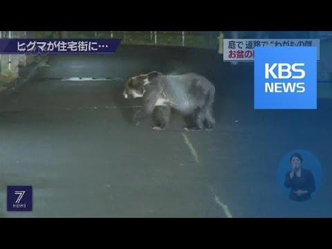 일본 삿포로 주택가에 곰 등장…주민 불안 / KBS뉴스(News)