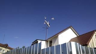 House doves
