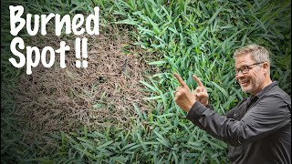 RoundUp Burned Lawn // What Happens When Your Spray ROUNDUP On Your Lawn