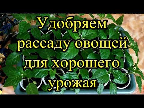 Удобряем рассаду овощей для хорошего урожая.