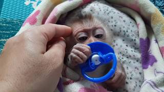 Monkey Tom was small to call his mother ..