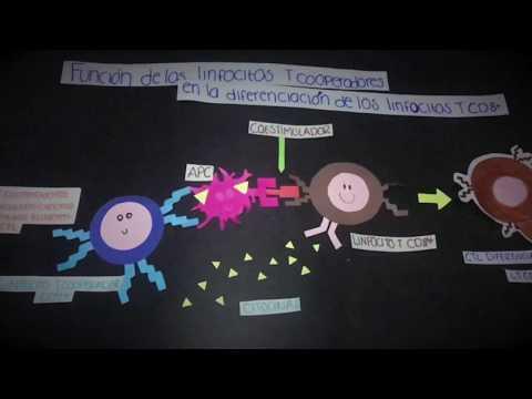 Il neurodermatitis a gravidanza come a Lei è stato
