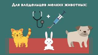 Реклама услуг ветеринарной клиники