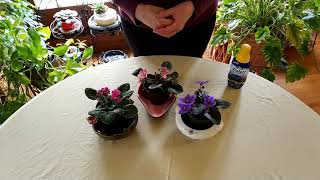 How To Get African Violets To Flower