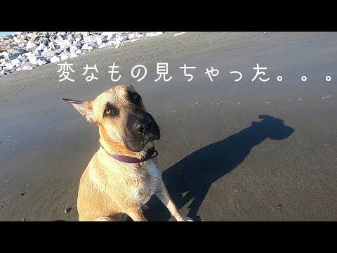 【盗撮】ビーチでポ(loli)ロリするJDたち [24:47x480p]  [24:47x480p]