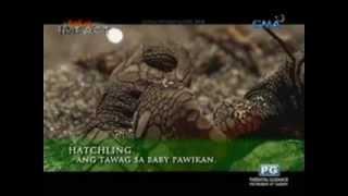 Born Impact: The Pawikan Conservation Center of Morong, Bataan