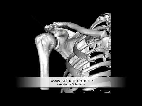 Schmerzen auf der rechten Seite des Rückens