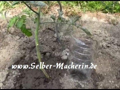 Tomatenbewässerungshilfe aus einer alten Plastikflasche