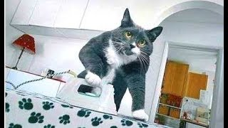 Смешные Kошки и Милые Котята 2019 ♥ Cat Marabacha #39