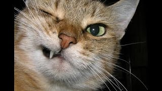 Котаны на ИЗМЕНЕ! Чумовая подборка кошачьих приколов со всего мира!