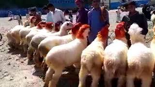mundra chatra dera ghazi khan - मुफ्त ऑनलाइन