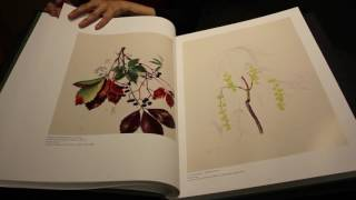 A Big Book Of Wildflowers: Kate Furbishs Botanical Drawings