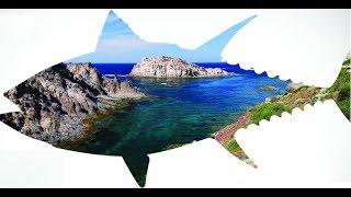 Как ловят тунца в средиземном море