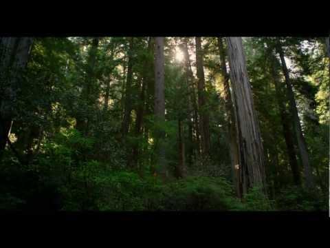 מסע מצולם בפארק רדווד - ביתם של עצי הסקוויה