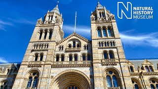 WHAT'S INSIDE THE NATURAL HISTORY MUSEUM LONDON (2019)