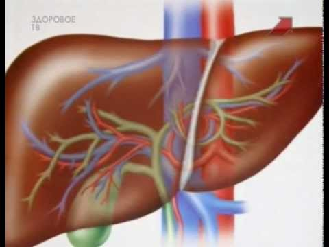 Как выглядит и работает печень человека, сколько весит орган?