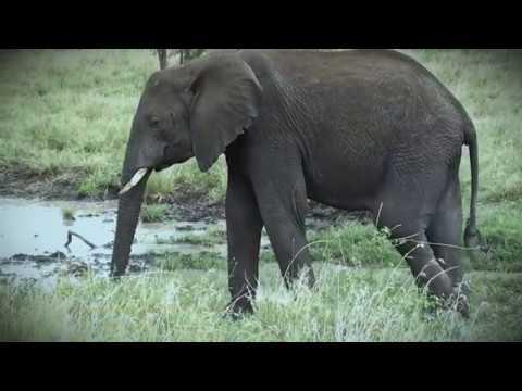 750 Save elephants poisoned