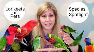 Lories and Lorikeets as Pets | Living with Lorys and Lorikeets | Species Spotlight