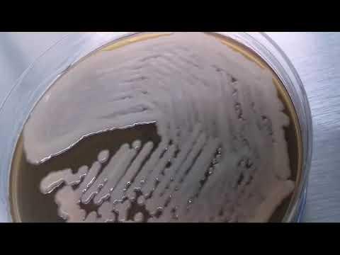 Hosszú genetikai rák