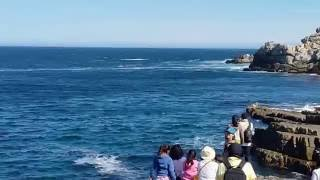 Watch a whale breach