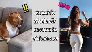 ขนาดหมายังมองอ้าปากค้าง แล้วคนจะไปเหลืออะไร... #รวมคลิปฮาพากย์ไทย