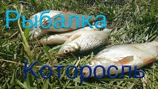 Которосль река рыбалка