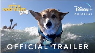 It's A Dog's Life | Official Trailer | Disney+