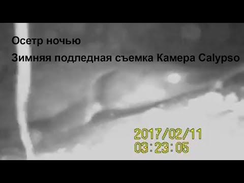 Осетр ночью Зимняя подледная съемка Камера Calypso