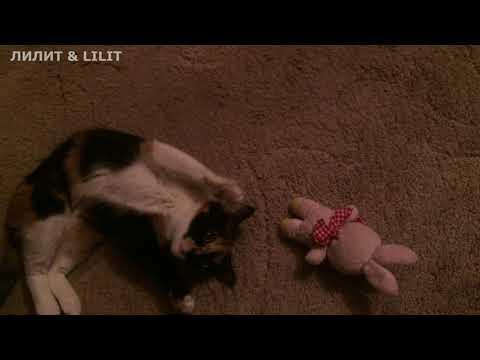 #кошки#оргазм Сегодня кошечка кайфует!!!;-)