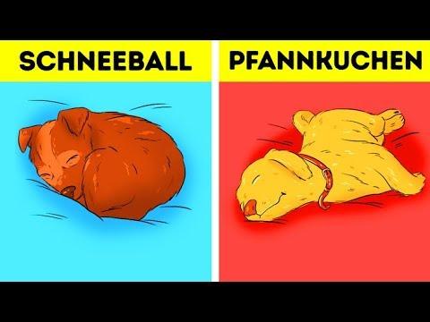 Was die Schlafposition über deinen Hund verraten kann